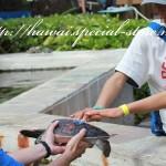 タッチプール・エクスプロレーションでカメとサメを触る